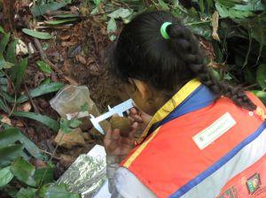 proyecto_biodiversidad_ifn_02
