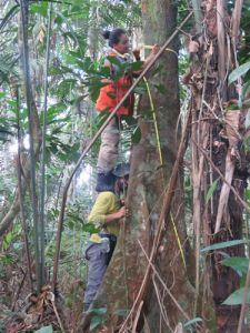 proyecto_biodiversidad_ifn_04