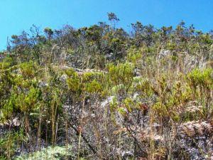 proyecto_biodiversidad_altiplano_cundiboyacense_02