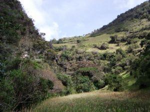 proyecto_biodiversidad_altiplano_cundiboyacense_03