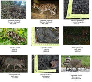 proyecto_biodiversidad_faber_castell_08