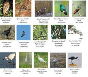proyecto_biodiversidad_faber_castell_09