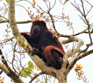 servicio_biodiversidad_02
