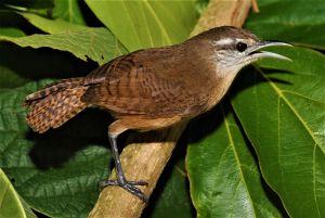 servicio_biodiversidad_03